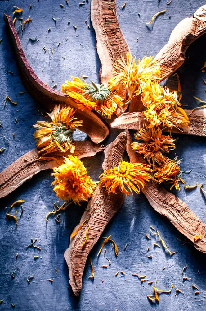 a nature mandala made from reishi slice shiitake mushrooms and calendula flowers